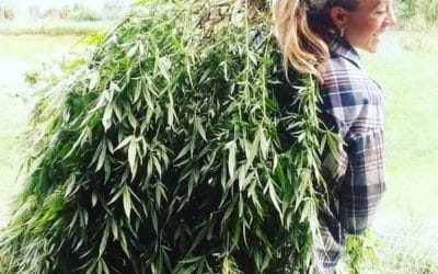 "Facebook ""Weeding Out"" Entrepreneurs and Hemp Consumers"
